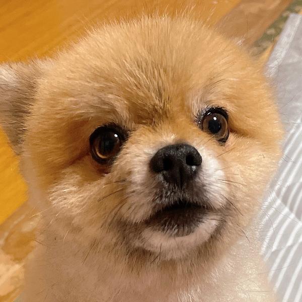 桃子のユーザーアイコン
