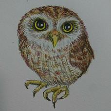 Cromwell_owlのユーザーアイコン