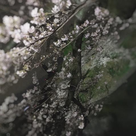 美桜-mio-のユーザーアイコン
