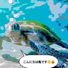 亀のユーザーアイコン