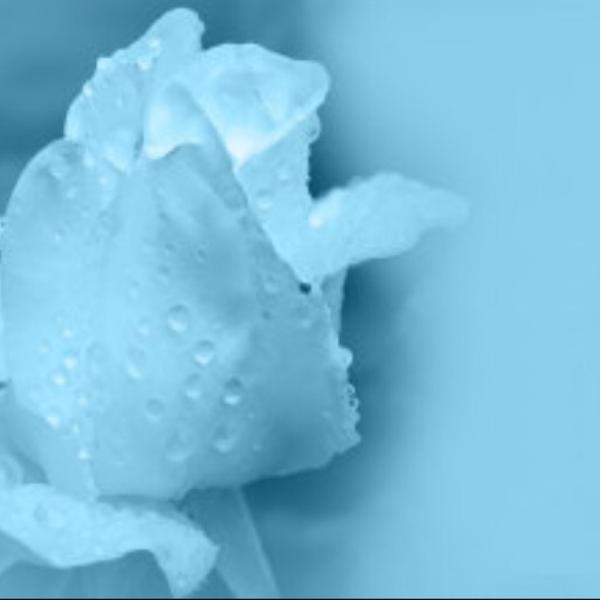 氷乃花-このは-のユーザーアイコン