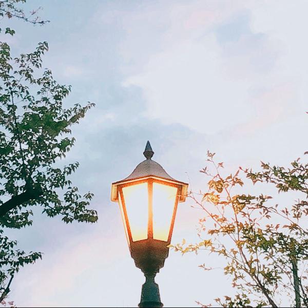 日向葵のユーザーアイコン