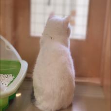 ฅ三毛猫ฅのユーザーアイコン