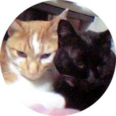 livenodamisakiのユーザーアイコン