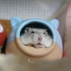 tsuguのユーザーアイコン