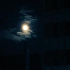 紫月和泉's user icon