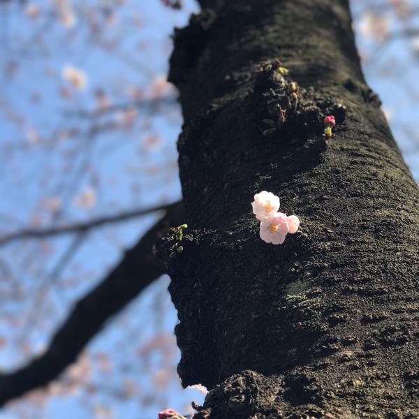 小桜みうのユーザーアイコン
