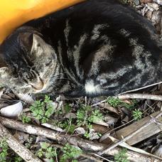 猫(*ΦωΦ*)のユーザーアイコン