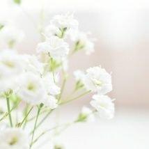 かすみ草のユーザーアイコン