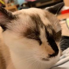 b-catのユーザーアイコン