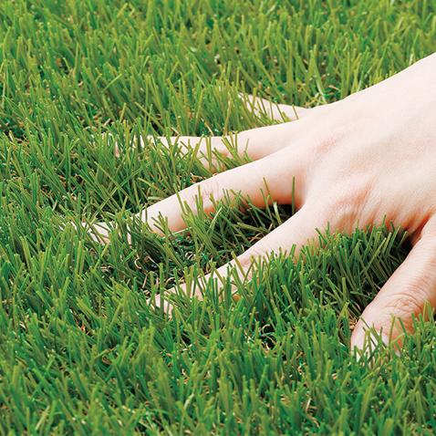 芝のユーザーアイコン