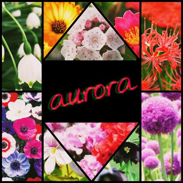 aurora  【公式】アカウントのユーザーアイコン