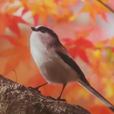 楓 涼璃【カエデスズリ】のユーザーアイコン