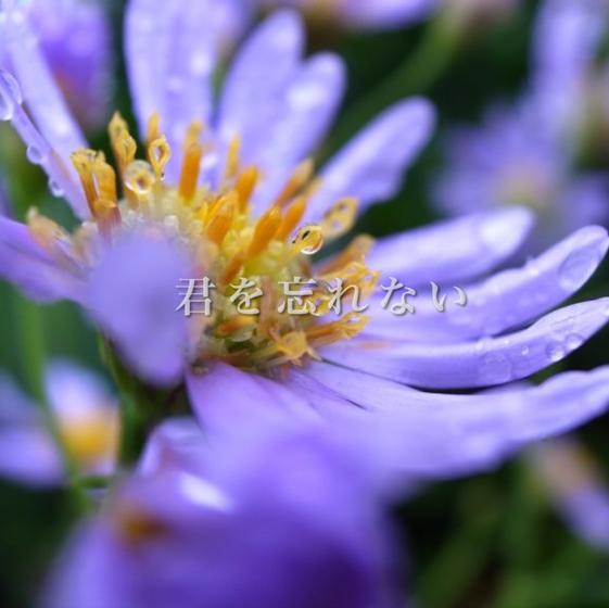 声劇企画 『恋愛花図鑑』のユーザーアイコン