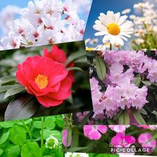 花束-ホアシュウ-のユーザーアイコン