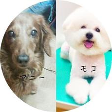 🐶キクノ's user icon