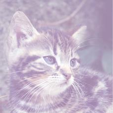 黒猫かずのユーザーアイコン