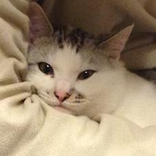 猫丸☆のユーザーアイコン