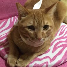 ネコ社長のユーザーアイコン