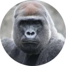 ごりんご's user icon