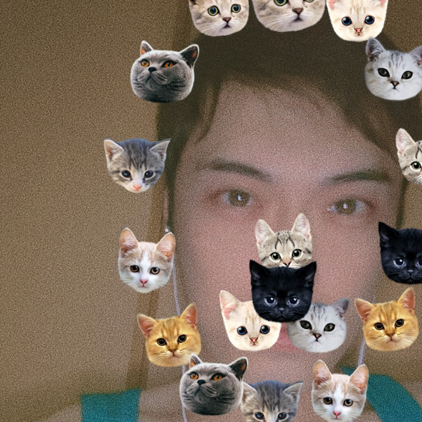 曇り🕊️🕊🕊バサバサッ's user icon