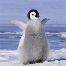 歌うペンギンのユーザーアイコン