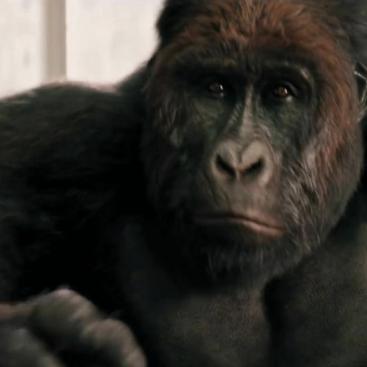 gorillaのユーザーアイコン
