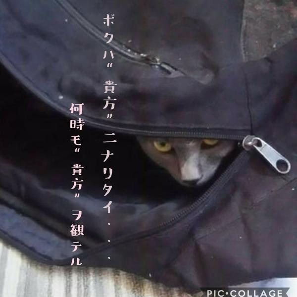 紫月‐シツキ‐(りの)のユーザーアイコン