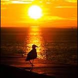 黄昏時の夕陽のユーザーアイコン