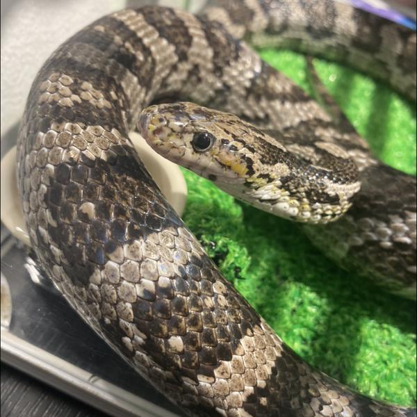 蛇数奇のユーザーアイコン