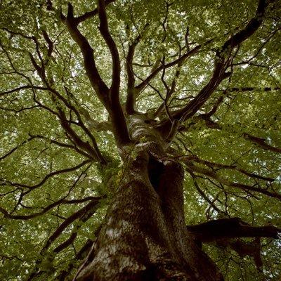 樹のユーザーアイコン