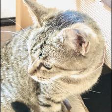 猫乃 さつきのユーザーアイコン