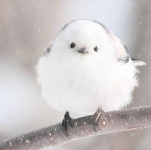 白舞のユーザーアイコン