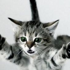 のの。〆迷い猫のユーザーアイコン