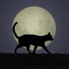 夜月のユーザーアイコン