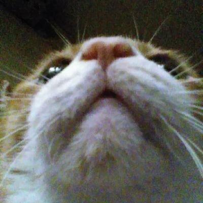 愛猫チョッパーのユーザーアイコン