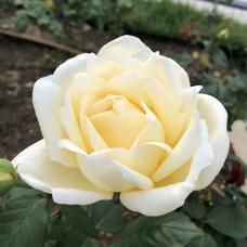 エマ✨今夜22時よりオルタナイト‼️誕生日枠開催!のユーザーアイコン