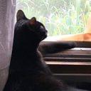 黒猫のユーザーアイコン