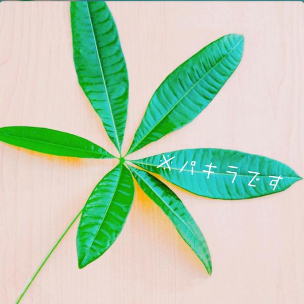 マリファ菜のユーザーアイコン