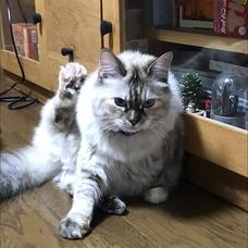 猫ぬこのユーザーアイコン