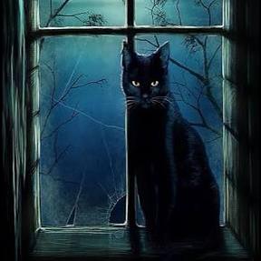 Y_stray catのユーザーアイコン