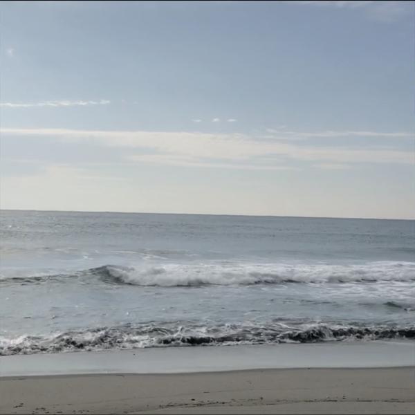 海の藻のユーザーアイコン