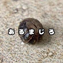 蟻あんと@あるまじろのユーザーアイコン
