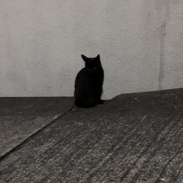 野良猫のユーザーアイコン