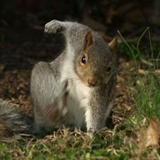 squirrelのユーザーアイコン