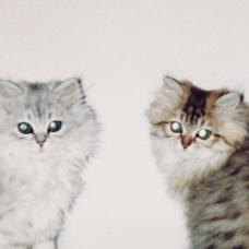銀猫堂₍˄·͈༝·͈˄₎◞︎̑̑ෆ⃛₍˄·͈༝·͈˄₎◞︎̑̑ෆ⃛💖🌟✨のユーザーアイコン