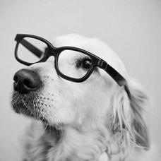 メガネ犬のユーザーアイコン