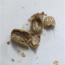 愉快なピーナッツのユーザーアイコン