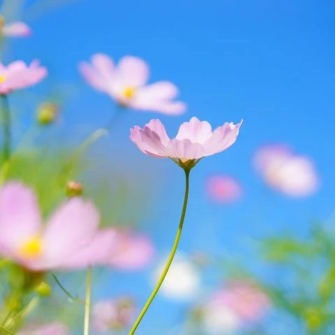 🌸郵鈴(ゆうりん)🌸のユーザーアイコン