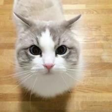 猫又さんが如く×しきのユーザーアイコン